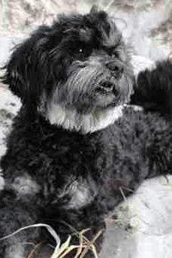 Hundefotos - Quelle: http://www.top-kleinhund.de